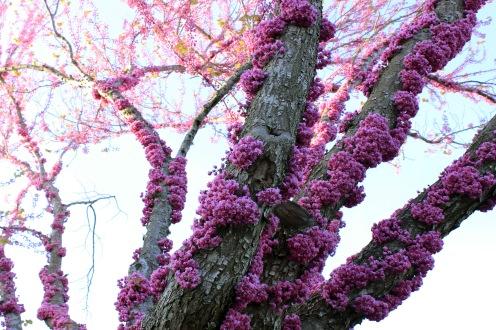 Spring Invasion